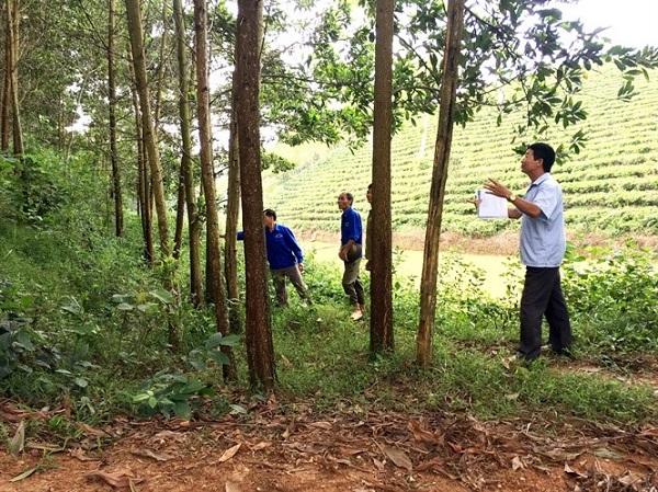 Phát triển kinh tế vững mạnh nhờ rừng có FSC